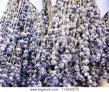 Hanging Bouquets Of Lavender Flowers