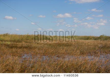 Everglades Freshwater Prairies