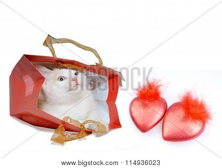 White kitten in red package and red hearts