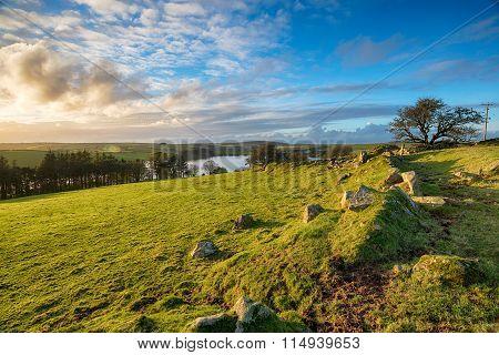 Moorland Fields