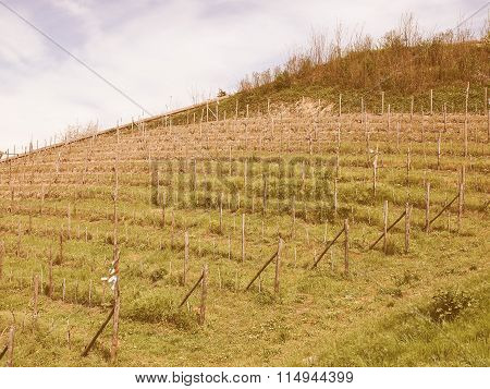 Retro Looking Grapevine Vitis