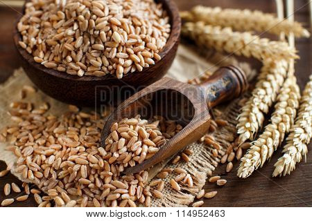 Uncooked Whole Spelt Grain In A Bowl With Spelt Ears