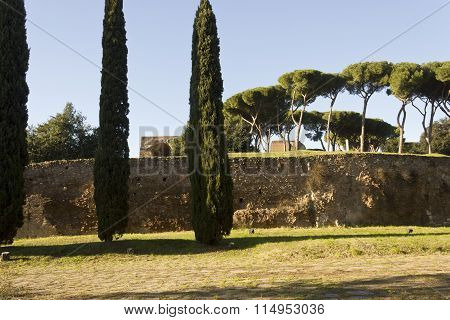 Palatine Hill From Via Di San Gregorio In Rome