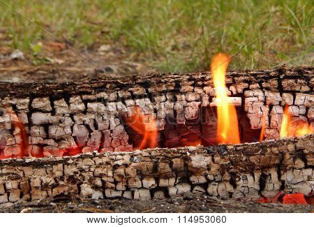 Burning logs in fire on the green grass