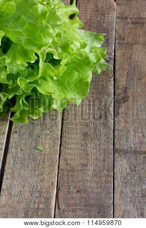 Leaves of lettuce truly spring and useful product, juicy, natural and very useful