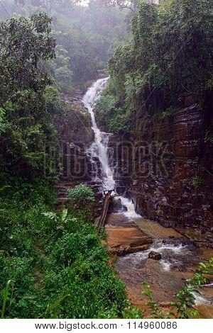 Tropical Downpour In Sri Lanka