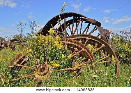 Flowering weeds grow around old steel wheels