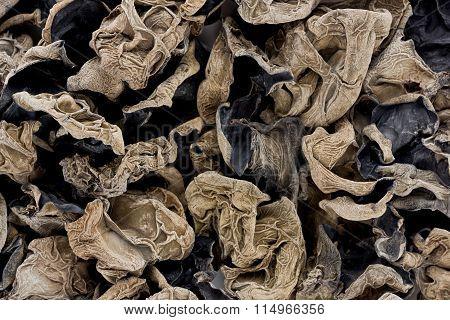 Cloud Ear Fungus