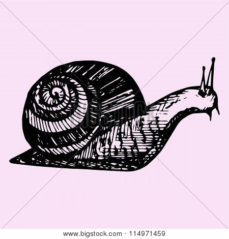 snail, hand drawn