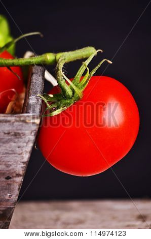 Fresh grape tomatoes with basil and coarse salt for use as cooking ingredients with a halved tomato
