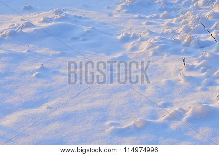 Cold Winter Weather All Vegetation Under The Snow