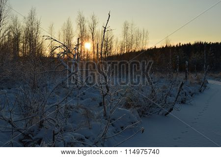 Cool The Frozen Winter Forest In The Morning At Sunrise