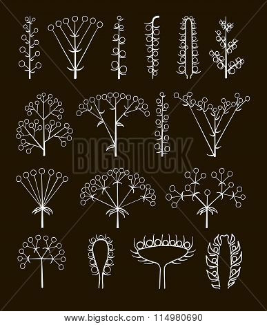Set Of Vector Different Types Of Inflorescence, Scientific Scheme Of Flower On Stalk ,botany.