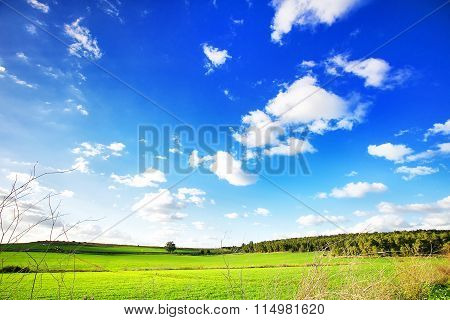 Beautiful landscape with a trees, clouds and blue sky