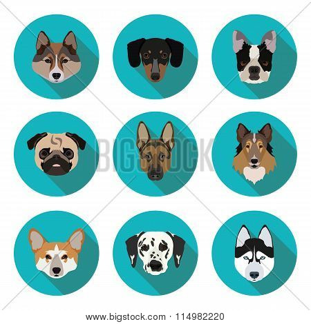 flat icons of pedigree dogs