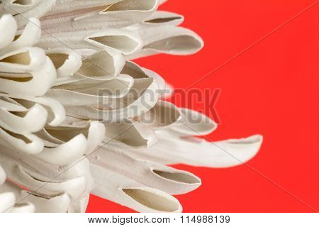 Flower Petal Abtract Background.