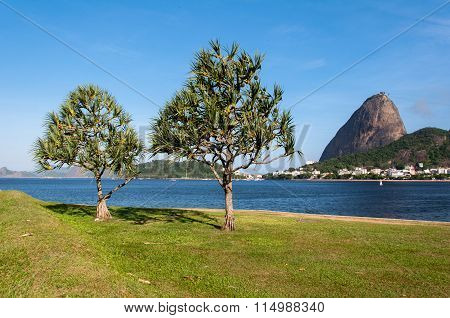 Sugarloaf Mountain and Two Trees