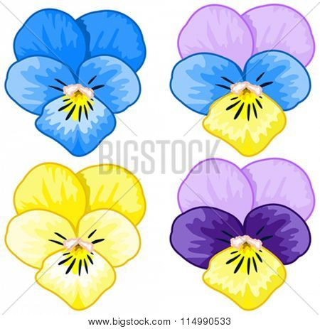 Illustration of several pansies