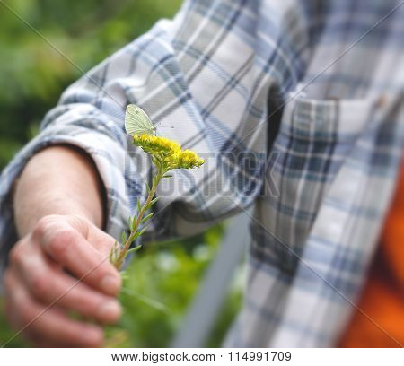 White butterfly in hand on yellow flower