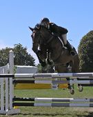Horse Clearing Hurdle