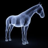 pic of animal x-ray  - horse under x - JPG