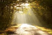 stock photo of sun rays  - Rural road running through the autumn forest on a misty morning - JPG