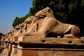 image of skarabaeus  - ancient karnak temple in luxor in egypt - JPG