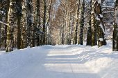 picture of christmas lights  - View of snow alley with trees covered with snow - JPG