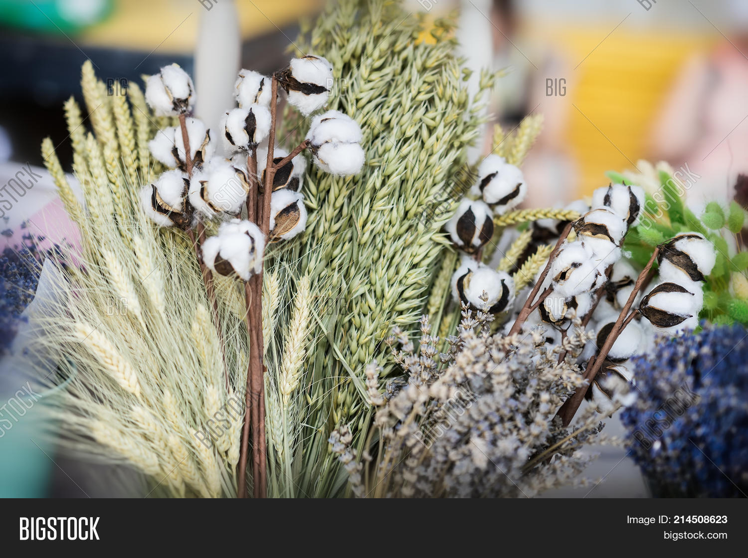 Close-up of creative bouquets of dried flowers with dried Gossypium branch  or cotton stem