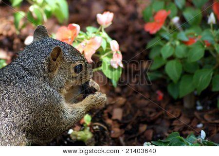 Cute squirrel in the garden