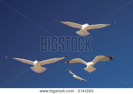 Sky Gliders