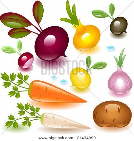complete set vegetable. root.