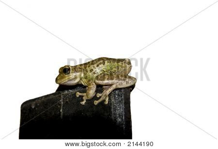 Isolated Frog On Metal Thing