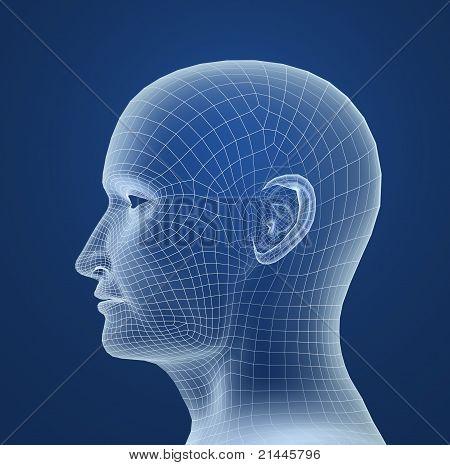 Human head wire model