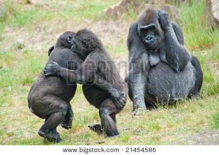 Two Young Gorillas Dancing
