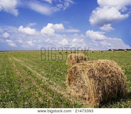Azul céu ensolarado, prime tempo de secagem na fazenda de feno