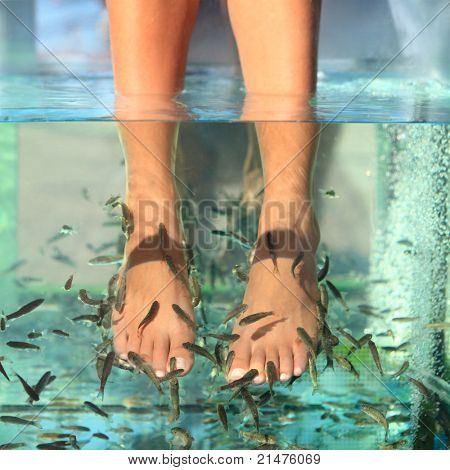 Fish spa feet pedicure skin care treatment with the fish rufa garra, also called doctor fish, nibble fish and kangal fish.