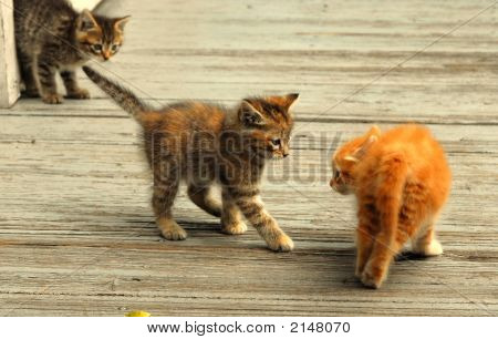 Three Kittens On A Bridge