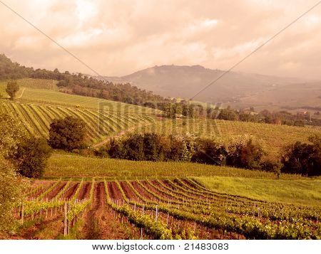 Vineyard in Umbria, Italy, Europe