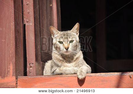 Cat resting in Nepal village
