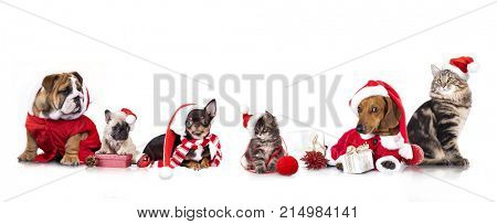 poster of dog and cat and kitens wearing a santa hat, Christmas dog and cat