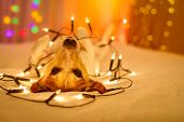 Christmas Dog With Fairy Lights poster