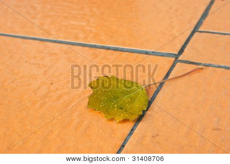 Autumn Aspen On Tile