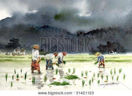 paddy plantation watercolor