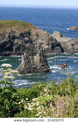 Rocky Sea And Wildflowers