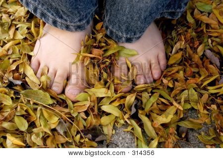 Bare Feet Fall Leaves