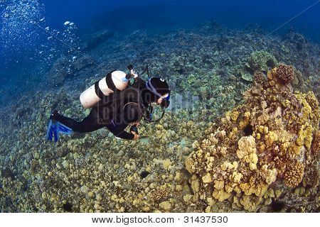 Looking Down On A Diver In Kona Hawaii