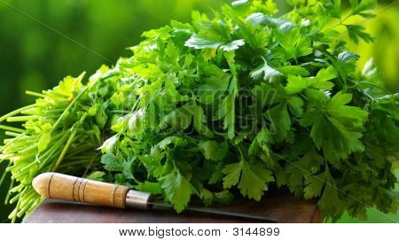 Fresh Coriander (Cilantro) Herb
