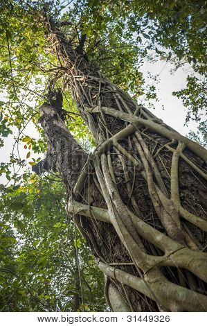 Tropical Tree In Chitwan National Park In Nepal.