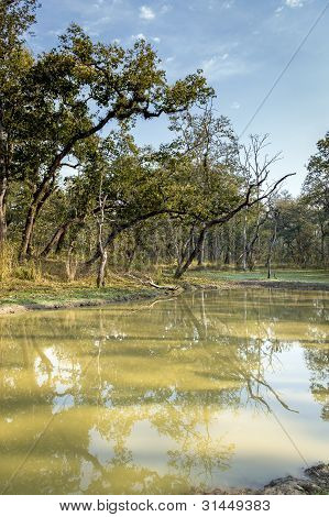 Lake In Nepal Jungle (chitwan).